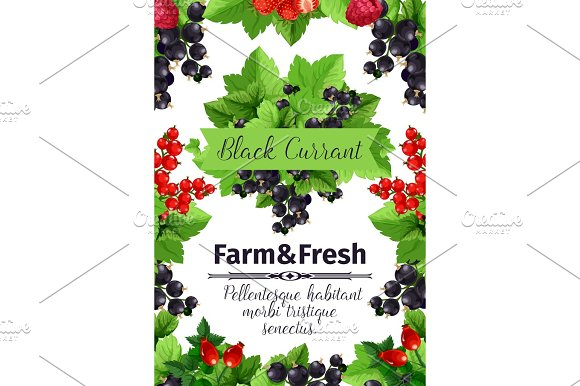 Fresh berries banner with fruit branches in Illustrations