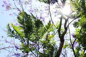 Green and purple tree