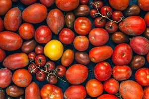 Red tomatoes and one yellow