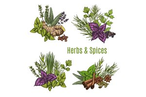 Fresh herb and spice sketches for food design