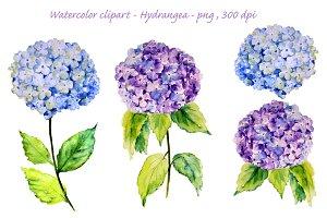 Watercolor Blue Hydrangea