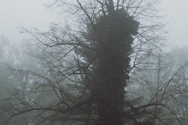 Strange single tree
