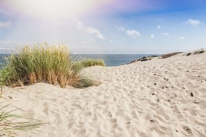Dunes on the shore of the Baltic Sea