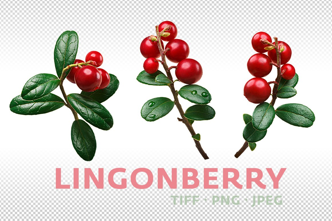 lingonberry graphic objects creative market. Black Bedroom Furniture Sets. Home Design Ideas