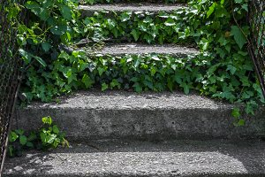 Stairs covered by vegetations