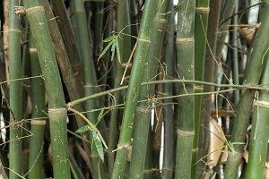 Pattern of vintage bamboo panel