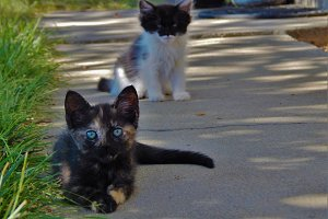Kittens on a Sidewalk