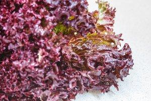 (Lollo Rossa) salad