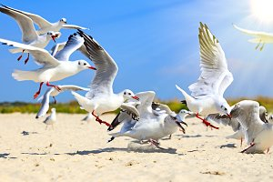 flock of sea gulls flying in the air