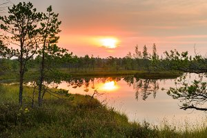 Natural Sunset Sunrise Over swamp