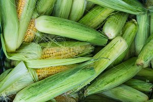 Corn at Farmers Fresh Food Market