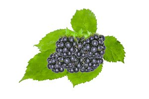 Blackberry With Green Leaves