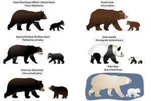 Bears and bear-cubs