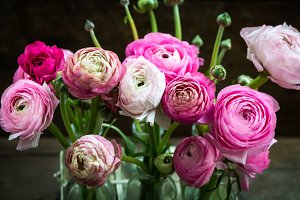 Bouquet of Pink Ranunculus Buttercup Flowers