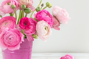 Pink Ranunculus Buttercup Flowers in Pink Pot on Light Backgroun