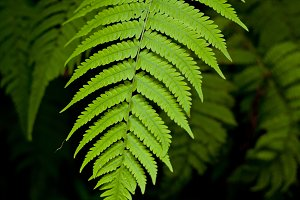 Fern leaves.