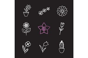 Flowers chalk icons set