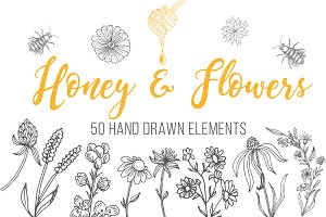 Honey & Organic Sketch Collection
