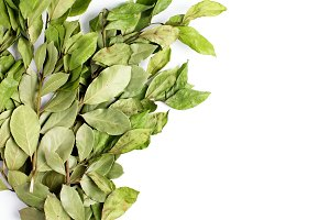 Branches of laurel bay leaves