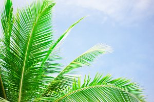 Palm tree leaves over peaceful tropical beach background, blue sea landscape card