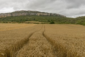 Wheat field in the Pyrenees