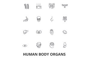 Human body organs, human body, medical, human anatomy, body system, body part line icons. Editable strokes. Flat design vector illustration symbol concept. Linear signs isolated