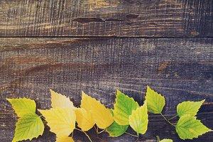 Autumn birch leaf