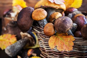 Autumnal wild forest mushrooms