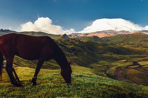 A lonely horse grazes on a green mountain meadow against the background of Mount Elbrus in the morning