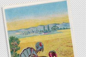 thanksgiving, turkey on a cornfield