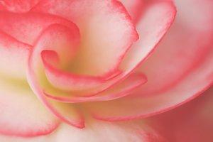 Lovely Spring Flower Bud Blossom