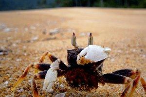 Crab on a sandy beach