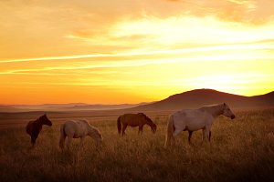 Horse on the meadow with sunset
