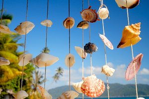 Sea shell chime
