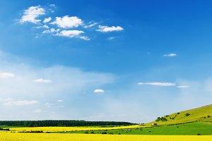 Idyllic summer landscape.