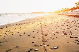 Bicycle tyre tracks on a sandy beach