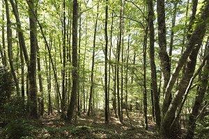 Forest in the Seva de Irati