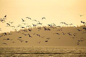 Flock of birds in evening light