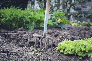 bio self-sufficiency garden herbs
