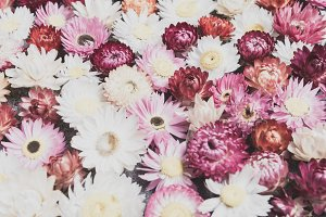 Abstract flowers for background