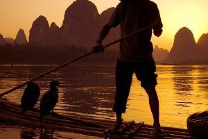 Traditional cormorant fishing