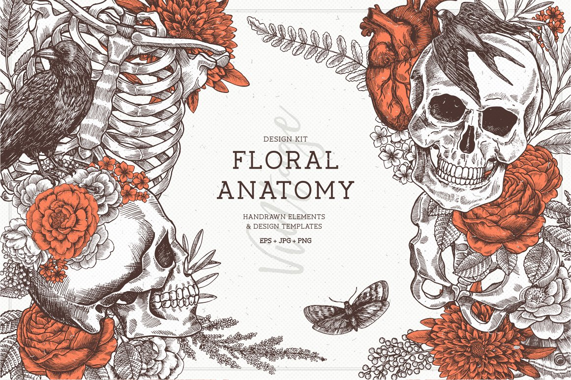 Floral Anatomy ~ Illustrations ~ Creative Market