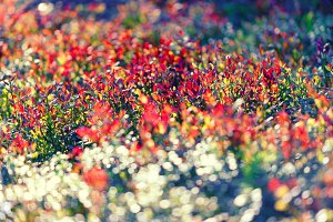 Multicolored bushes in the forest