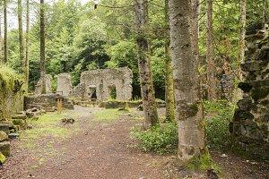 Forest in Irati