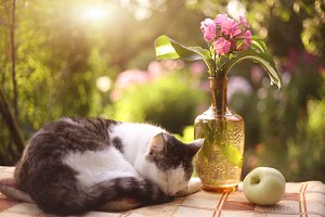 cat napping sleep with flox flowers in vase