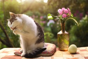 tom male beautiful cat with flox flowers in vase on green garden background