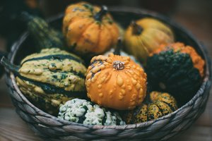 Thanksgiving still-life with pumpkin