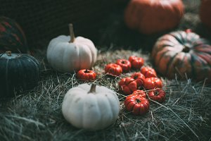 Pumpkins and red eggplants