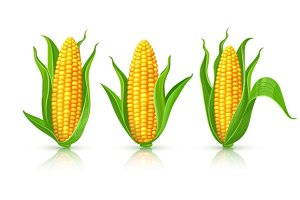 Corn cobs isolated set