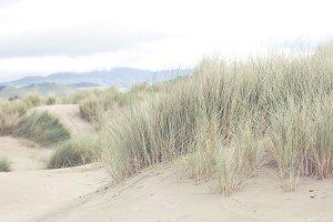 Dune Grass 1 of 3